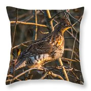 Grouse In A Tree Throw Pillow