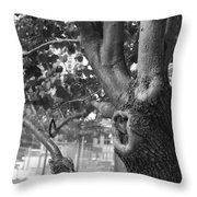 Growth On The Survivor Tree In Black And White Throw Pillow