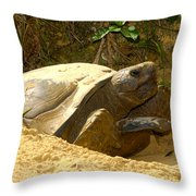 Florida Gopher Tortoise And Home Throw Pillow