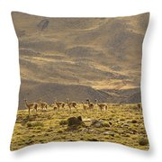 Guanaco Herd, Argentina Throw Pillow