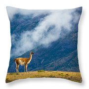 Guanaco Mother And Child Throw Pillow