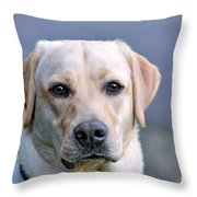Guide Dog In Training Throw Pillow