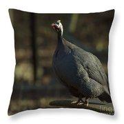 Guinea Chicken Throw Pillow
