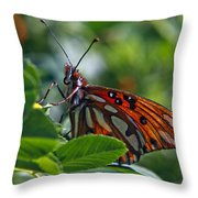 Gulf Fritillary Butterfly Close Up Throw Pillow