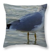 Gull In The Surf Throw Pillow