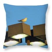 Gull On Guard Throw Pillow