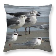 Gulls And Terns Throw Pillow