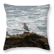 Gulls Podium  Throw Pillow