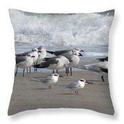 Gulls Terns Skimmers Throw Pillow