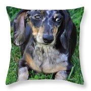 Gus The Dappled Miniature Dachshund Throw Pillow