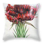 Gymea Lily Throw Pillow