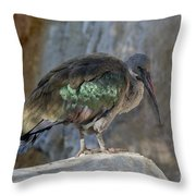 Hadada Ibis Throw Pillow
