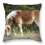 Haflinger 1 Throw Pillow