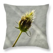 Hairy Plant Seed Pod 3 Throw Pillow