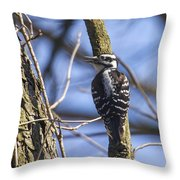 Hairy Woodpecker - Female Throw Pillow