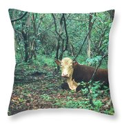 Haleakala National Park Hawaii Cow On Waterfall Trail Throw Pillow