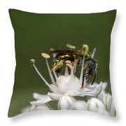 Halicid Bee Amongst The Anthers Throw Pillow