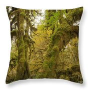 Hall Of Mosses 3 Throw Pillow