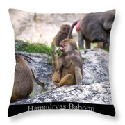Hamadryas Baboon Throw Pillow