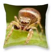 Hammerjawed Jumper I Throw Pillow by Clarence Holmes