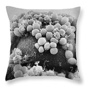 Hamster Egg And Cumulus Cells Sem Throw Pillow