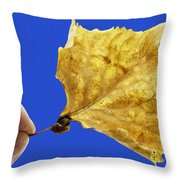 Hand Holding Dry Cottonwood Leaf Throw Pillow