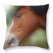Handsome Bay Shire Horse Throw Pillow