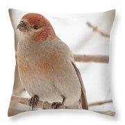 Handsome Pine Grosbeak Throw Pillow