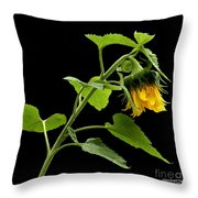 Hang Down Your Head Throw Pillow