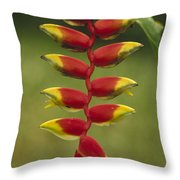 Hanging Heliconia Blooming In Rainforest Throw Pillow
