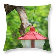 Hanging Squirrel Throw Pillow