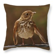Happy Hermit Thrush Throw Pillow