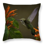 Happy Little Hummingbird  Throw Pillow