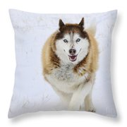 Happy Husky Throw Pillow