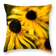 Happy Susans Throw Pillow