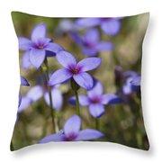 Happy Tiny Bluet Wildflowers Throw Pillow