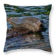 Harbor Seal At Low Tide Throw Pillow