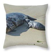Harbor Seal Suckling Young Throw Pillow