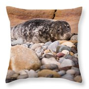 Harbour Seal   Throw Pillow