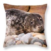Harbour Seal Close Up Throw Pillow