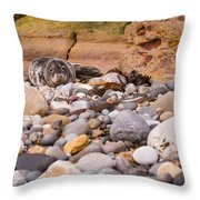 Harbour Seal On Pebble Beach Throw Pillow