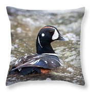 Harlequin Duck In Rapids Throw Pillow