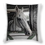 Harley In The Barn Throw Pillow