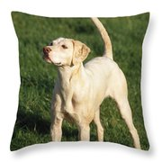 Harrier Dog Throw Pillow