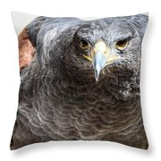 Harris Hawk Ready For Attack Throw Pillow