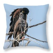 Harris Hawks Throw Pillow