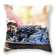 Harvest At Vineyard In Santa Cruz Throw Pillow