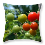 Harvest Tomatoes Throw Pillow