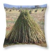 Harvested Sesame Crop Throw Pillow