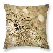 Harvestman Spider Throw Pillow